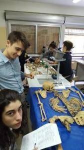 Corso di osteologia 2018
